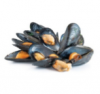 08-mussels